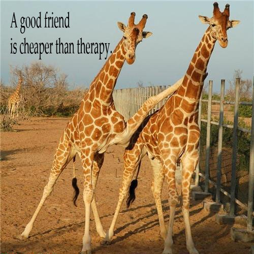 Giraffe Quotes Funny: Some Quotes About Friendship